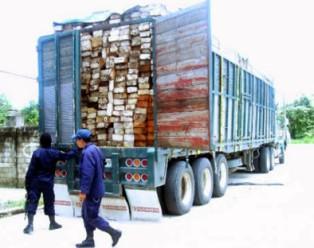 Una camionada de madera ilegal fue asegurada por la PEP