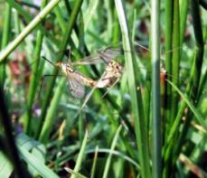 Condiciones climaticas favorecen la proliferación delmosquito