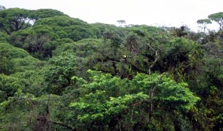 La Selva Lacandona tema del concurso de dibujo de TV Azteca.