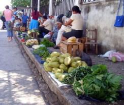 Yerbas y frutos de milenaria tradición.