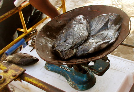 Necesario incrementar el consumo de pescado entre los chiapanecos.