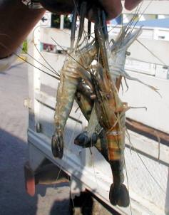 No corre riesgo quien coma mariscos de aguas chiapanecas