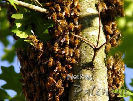Ya son varios los ataques de abejas en esta zona.