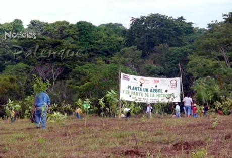 Seis hectáreas fueron reforestadas con participación de la sociedad.