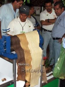Calidad y precio del hule chiapaneco resulta atractivo a Guatemala.