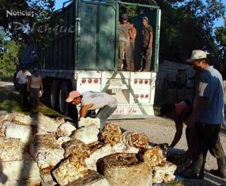 Primera exportación de hule chiapaneco a Guatemala.