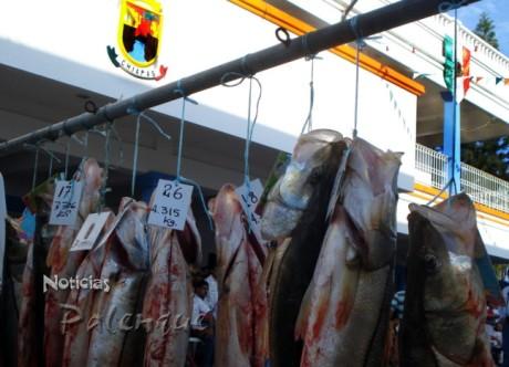Los ejemplares ganadores del torneo de pesca deportiva.