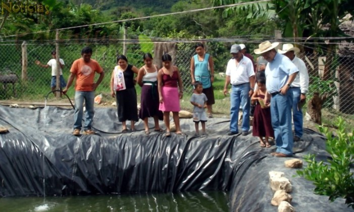 Noticiaspalenque 39 s weblog noticias diarias de palenque y for Cria de pescado en estanques