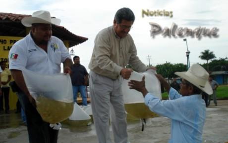 Junto con edil de Benemérito entregó 160 mil alevines a productores.