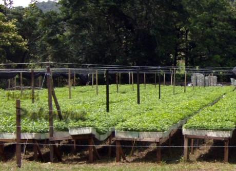 El campesino desconoce rentabiludad de otros cultivos.