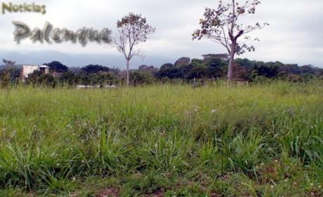 Pese a que numerosos fraccionamientos no estan habitados se sigue deforestando.