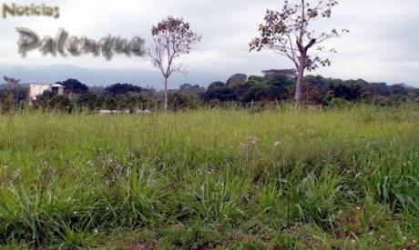 Muchos fraccionamientos sin habitar, pero se sigue deforestando.