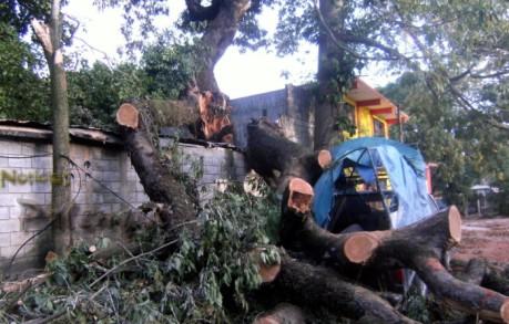 La pesada rama cayó sobre la barda, la camioneta y los cables.