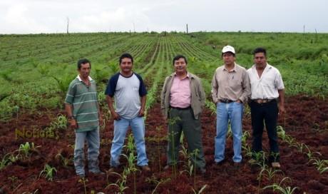 Se proyecta establecer hasta 20 mil has del cultivo de palma.